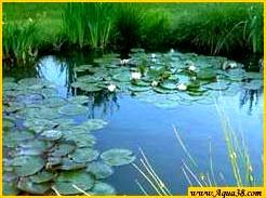Aqua38 r alisations de bassin de jardin for Bache epdm bleu