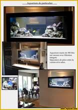Aquarium eau de mer eaudemer23.jpg