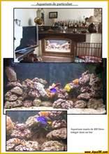 Aquarium eau de mer eaudemer24.jpg