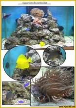 Aquarium eau de mer eaudemer26a.jpg