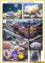 Aquarium eau de mer mer15-600.jpg