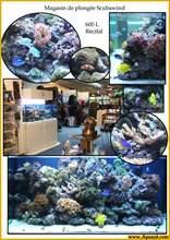 Aquarium eau de mer scubawind600.jpg
