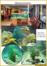 Aquarium eau douce eau-douce600.jpg