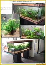 Aquarium eau douce eaudouce25.jpg