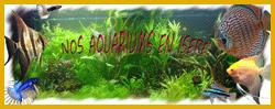 Forum Nos aqua en isere