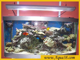 Gardiennage pour aquarium